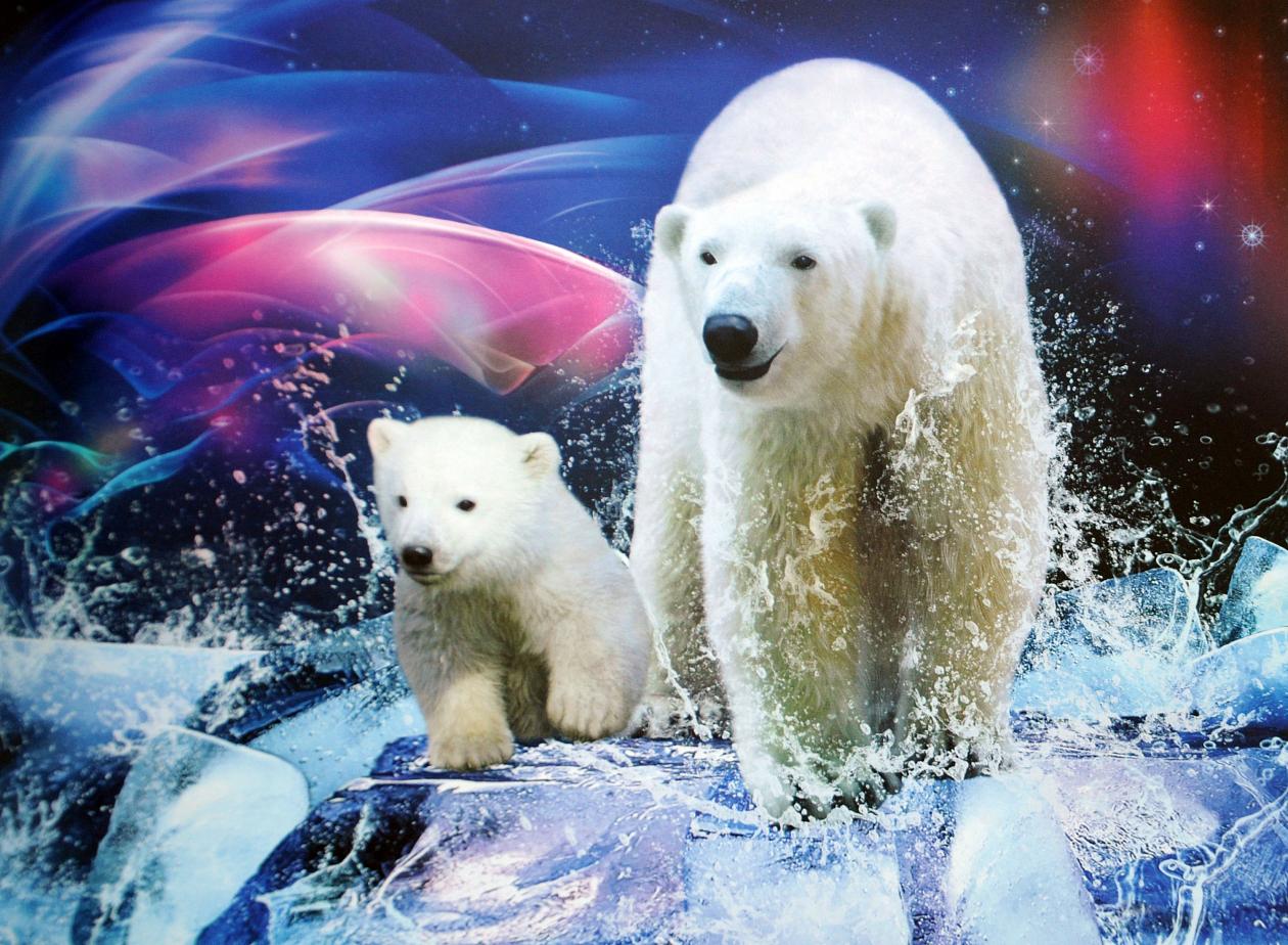 участия медведь белый полярный фотообои что поговорим